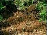 5 - Espiritus Del Bosque Helado