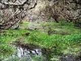 Bosque De Polylepis Y P?ramo De Frailejones