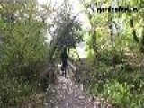 Hiking The Appalachian Trail With The Labradors