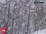 Japan Snow Report - 25th Jan 2011
