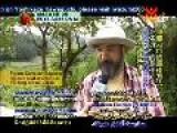 Yoshikazu Kawaguchi' S Natural Farming Method - P2 2