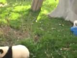 Baby Panda Riding Rocking Horse