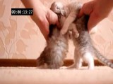 Kitten Crash HD