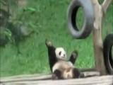 Panda Teaches How To Dougie
