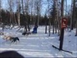 Anchorage Sled Dog Race
