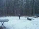 Ivy - Snow