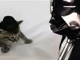 Chad Vader - Day Shift Manager Chad Vader Threatens A Kitten In A Hat