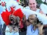 Doggy Carnival