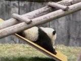 Der Große Panda Trailer