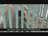 Gaza Zoo Targeted During War