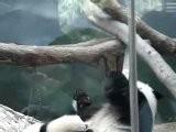 Mama Panda Hugs Baby Panda