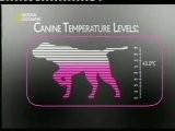 Solenopsina: Perros Detectores De Hormigas Rojas