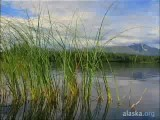 Alaska.org - Mat Su: Where Alaska Comes To Play - Official Video