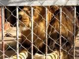 Haile Selassie Zoo In Addis Ababa , Ethiopia - Part 1
