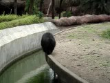 Bear In Full Masti