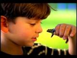 Close Up PROFILE Young Hispanic Boy Looking At + Holding Frog In Hand + Smiling