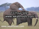 Elephants Having Wild Sex! Elephant Mating Ritual