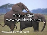 Elephants Mating! Elephant Girls Gone Wild!