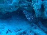 Murey Eel At Bonaire