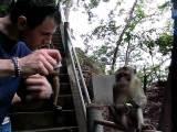 Opica Je Bonbone