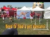 Pet Or Doggie Daycare In Pennsylvania