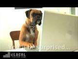 Teachers Pet Dog Training - Dog Training In Saint Petersburg , FL