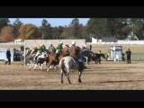 Zena' S First Polocrosse Tournament